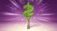 Growing dollar tree  Stock Footage