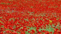poppy field - stock footage