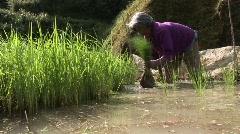 Batad planting rice 13 Stock Footage