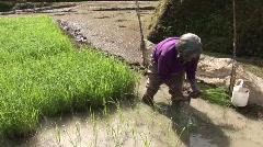 Batad planting rice 12 Stock Footage