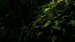 Lost in the jungle - HD - stock footage
