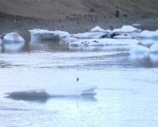 Seagull floating on ice - stock footage