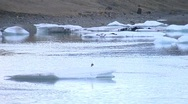 Seagull floating on ice Stock Footage