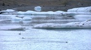 2 seals in ice lagoon Stock Footage