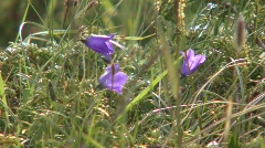 Zoom Out Mountain Flowers To Panorama Stock Footage