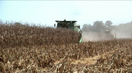 Stock Video Footage of two combines on one row