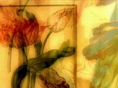 flower slideshow video loop Stock Footage