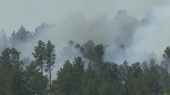 P00594 Smoke from Forest Fire Stock Footage