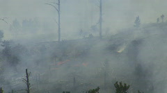 P00597 Forest Fire Closeup Stock Footage