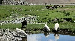 Mongolian landscape Stock Footage