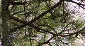 Starkey Nature Park HD Footage