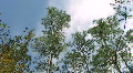 Starkey Nature Park Footage