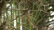 Starkey Nature Park Stock Footage