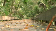 Boardwalk Bridge In Swampy Nature Park Stock Footage