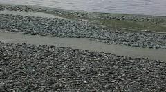 Dead fish - stock footage