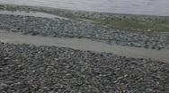 Dead fish Stock Footage
