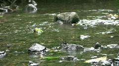 vid077 water flowing in stream - stock footage