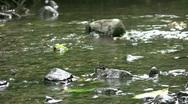Vid077 water flowing in stream Stock Footage