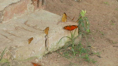 Brightly colored butterflys on a porch step Stock Footage