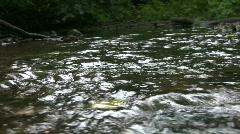 vid075 water flowing in stream - stock footage