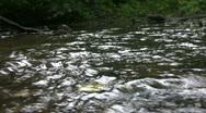 Vid075 water flowing in stream Stock Footage
