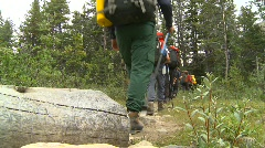 Sports and fitness, hikers in forest Stock Footage