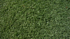 Texture Dolly - astro turf Stock Footage