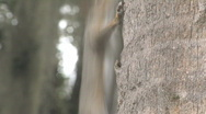 Squirrel on Palm Tree Clip 2 Stock Footage