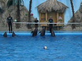 Dolphins jumping  Stock Footage