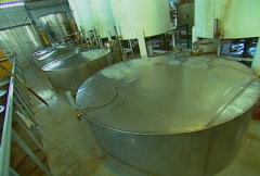 tequila production 13 - stock footage
