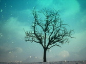 Snow and lone tree Stock Footage