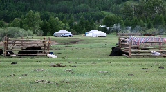 Mongolian landscape with yaks and yurts - stock footage
