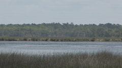 Florida Gulf Coast Marsh Clip 2 Stock Footage