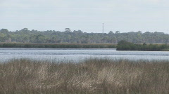 Florida Gulf Coast Marsh - stock footage