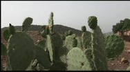 Cactus and mountain Stock Footage