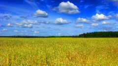 Field and clouds time lapse 2 saturated Stock Footage