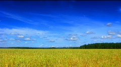Field and clouds time lapse saturated Stock Footage