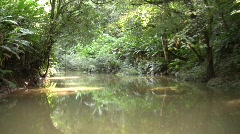 Drifting up an Amazonian creek Stock Footage