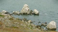 Cormorants Stock Footage