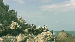 Cormorants flying away Stock Footage