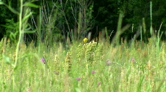 Forest birdie. Stock Footage