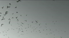 Bat Wing Sky Stock Footage