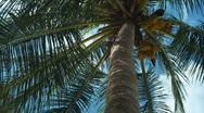 Palm tree 2 Stock Footage