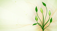 Greenish floral animation HD720 Stock Footage