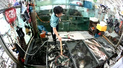 Fresh seafood is displayed and produced Stock Footage
