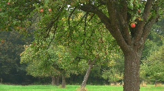 Apple tree in fall Stock Footage