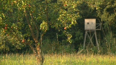 Apple tree and stand Stock Footage