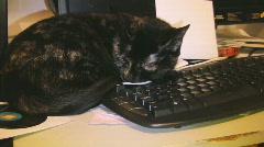 Ms Norris naps on keyboard Stock Footage