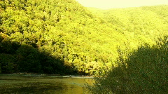 Sunny forest reflected in the river  - stock footage