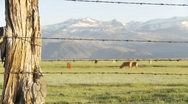 Eastern Sierras and cows with fence Stock Footage